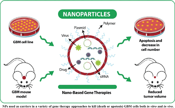 The Effectiveness of Nanoparticles on Gene Therapy for Glioblastoma Cells Apoptosis: A Systematic Review
