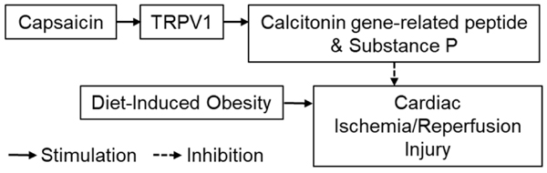 Protective Effects Of Trpv1 Activation Against Cardiac Ischemia Reperfusion Injury Is Blunted By Diet Induced Obesity Bentham Science