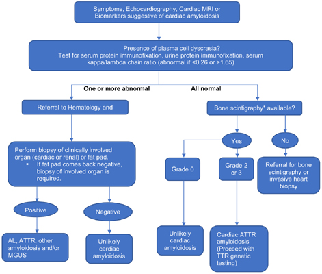 Fundamentals of Light Chain Cardiac Amyloidosis: A Focused Review