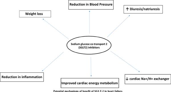 Sodium-Glucose Cotransporter Inhibitors in Non- Diabetic Heart Failure: A Narrative Review