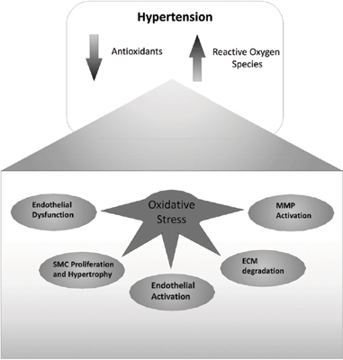 Sources and Effects of Oxidative Stress in Hypertension