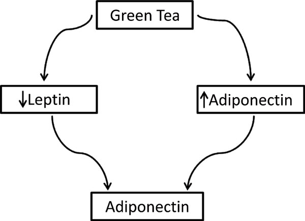 The Anti-Obesity Potential of Green Tea: The Effect on Leptin and Adiponectin