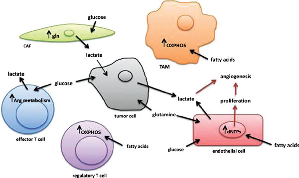 Metabolism in the Tumor Microenvironment: What is Known about Stromal and Immune Cells?