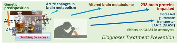 Actions of Alcohol in Brain: Genetics, Metabolomics, GABA Receptors, Proteomics and Glutamate Transporter GLAST/EAAT1