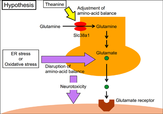 Possibility that the Onset of Autism Spectrum Disorder is Induced by Failure of the Glutamine-Glutamate Cycle