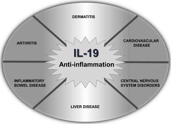 Interleukin-19 as an Immunoregulatory Cytokine