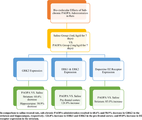 The Effect of PAOPA, a Novel Allosteric Modulator of Dopamine D2 Receptors, on Signaling Proteins Following Sub-Chronic Administration in Rats
