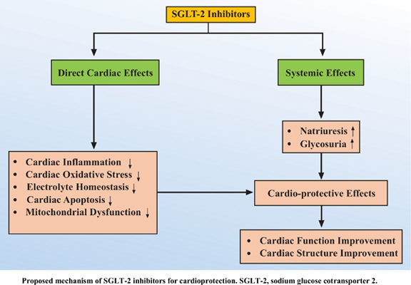 SGLT-2 Inhibitors: Ideal Remedy for Cardioprotection in Diabetes Mellitus