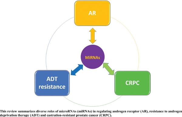 MicroRNA Regulation of Androgen Receptor in Castration-Resistant Prostate Cancer: Premises, Promises, and Potentials