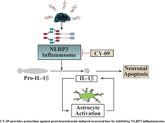Molecular Mechanism of a Specific NLRP3 Inhibitor to Alleviate Seizure Severity Induced by Pentylenetetrazole