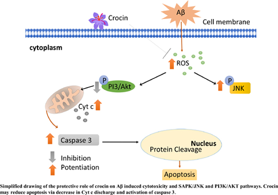 Crocin Protects Against Beta-Amyloid Peptide-Induced Apoptosis in PC12 Cells Via the PI3 K Pathway