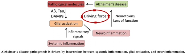 Glia-Driven Neuroinflammation and Systemic Inflammation in Alzheimer's Disease