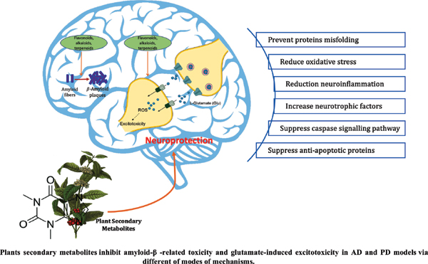 Potential of Medicinal Plants as Neuroprotective and Therapeutic Properties Against Amyloid-β-Related Toxicity, and Glutamate-Induced Excitotoxicity in Human Neural Cells