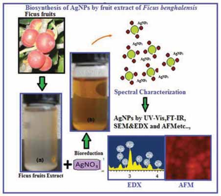synthesis and antibacterial activity of silver Antibacterial properties of silver nanoparticles synthesized using pulicaria glutinosa plant extract as a green bioreductant mujeeb khan,1 shams tabrez khan,2.