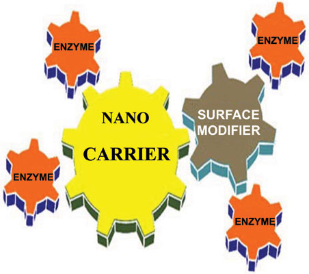Nanotechnology in Enzyme Immobilization: An Overview on