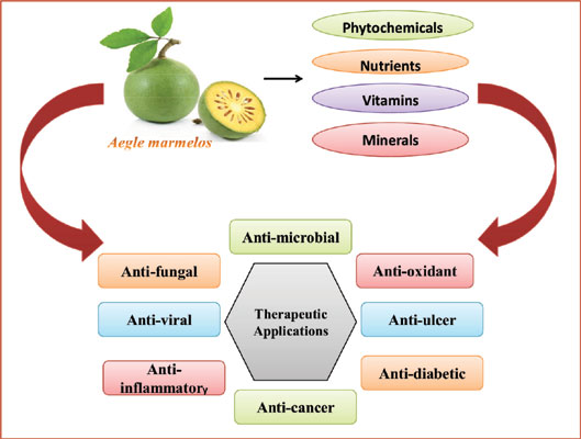 Therapeutic And Nutraceutical Potential Of Bioactive Compounds In Aegle Marmelos L An Overview Bentham Science