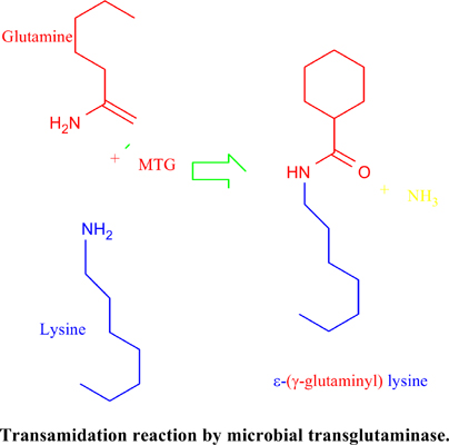 Application of Microbial Transglutaminase in Wheat Bread Industry: A Review