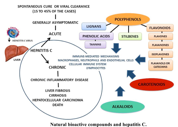 Natural Bioactive Compounds as Adjuvant Therapy for Hepatitis C Infection