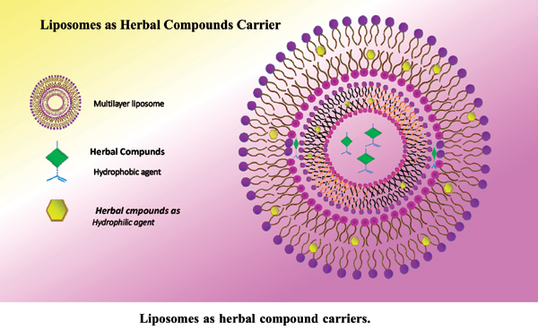 Liposomes as Herbal Compound Carriers: An Updated Review