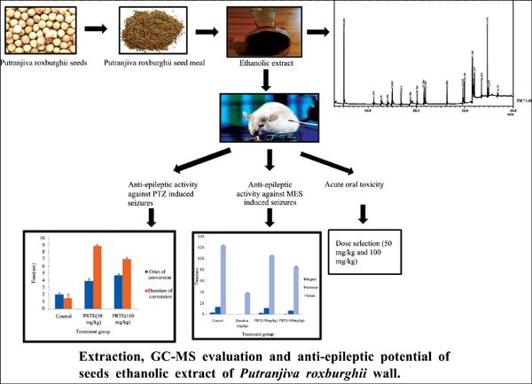Extraction, GC-MS Evaluation and Anti-epileptic Potential of Seeds Ethanolic Extract of Putranjiva roxburghii Wall