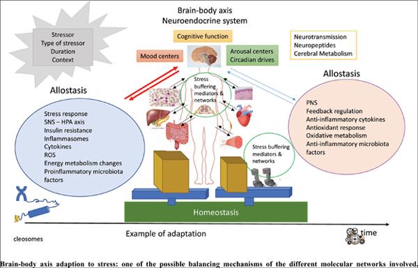 Neuroendocrine Response to Psychosocial Stressors, Inflammation Mediators and Brain-periphery Pathways of Adaptation