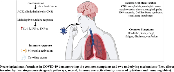 COVID-19 Outbreak: Neurological Manifestations Beyond Cough and Fever