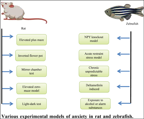 Importance of Zebrafish as an Efficient Research Model for the Screening of Novel Therapeutics in Neurological Disorders