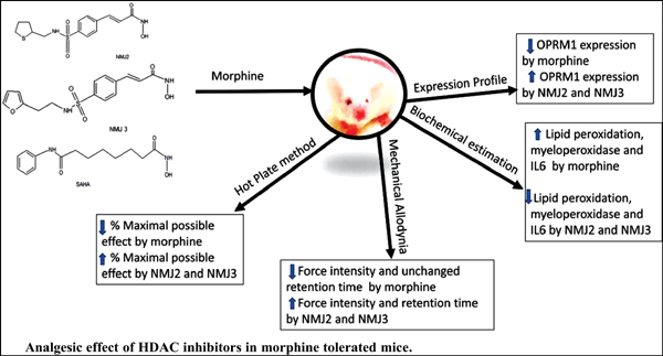 Histone Deacetylase Inhibitors Prevented the Development of Morphine Tolerance by Decreasing IL6 Production and Upregulating μ-Opioid Receptors