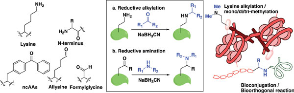 Current Organic Synthesis   Bentham Science