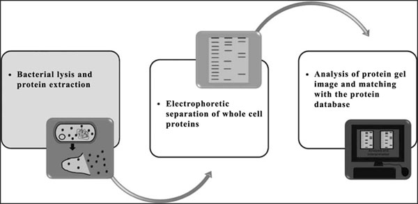 Bacterial Whole Cell Protein Profiling: Methodology