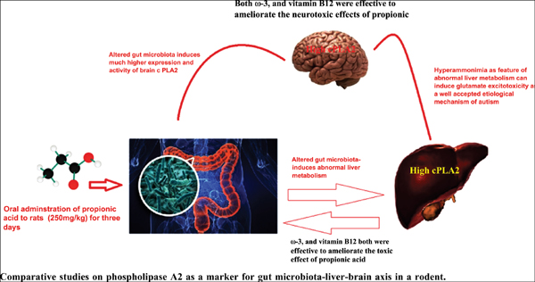 Comparative Studies on Phospholipase A2 as a Marker for Gut Microbiota- liver-brain Axis in a rodent Model of Autism
