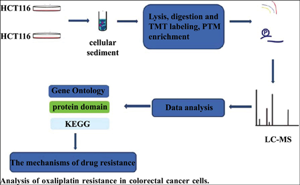 Analysis of Oxaliplatin Resistance in Colorectal Cancer Cells by Combined Proteomics and Phosphoproteomic