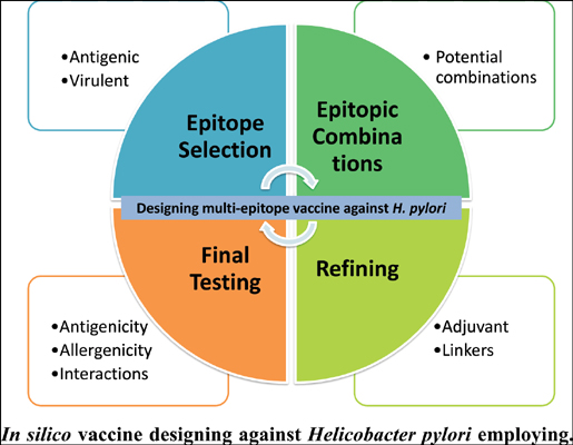 A Multi-Method and Structure-Based <i>In Silico</i> Vaccine Designing Against <i>Helicobacter pylori</i> Employing Immuno-Informatics Approach
