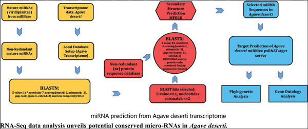 RNA-Seq Data Analysis Unveils Potential Conserved Micro-RNAs in <i>Agave Deserti</i>
