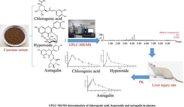 UPLC-MS/MS Determination of Chlorogenic Acid, Hyperoside and Astragalin in Plasma and its Pharmacokinetic Application in Liver Injury Rats