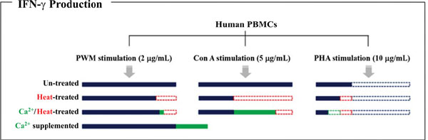 Mitogen-Induced Interferon Gamma Production in Human Whole
