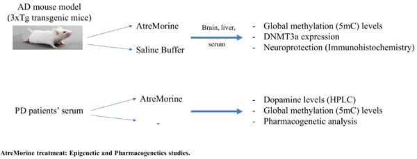 AtreMorine Treatment Regulates DNA Methylation in Neurodegenerative Disorders: Epigenetic and Pharmacogenetic Studies