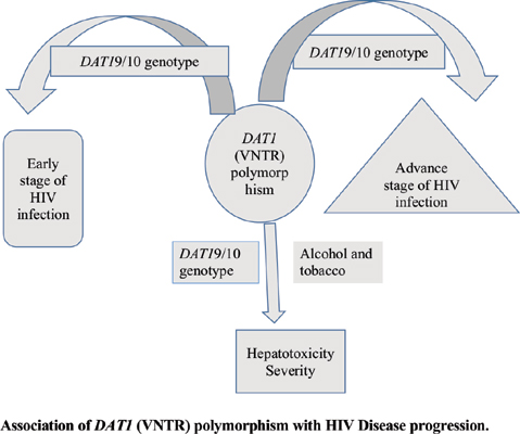 Occurrence of DAT1 (VNTR) Polymorphism in Individuals with HIV Infection