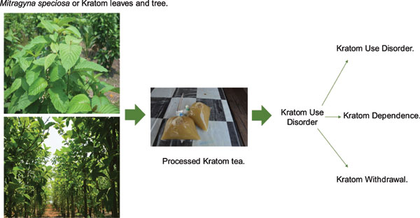 Substance Use Disorder Related to Kratom (Mitragyna speciosa
