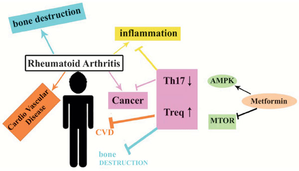 Metformin One In A Million Efficient Medicines For Rheumatoid Arthritis Complications Inflammation Osteoblastogenesis Cardiovascular Disease Malignancies Bentham Science