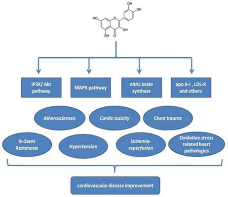 a review of quercetin antioxidant and anticancer properties wjpps jpg View in article