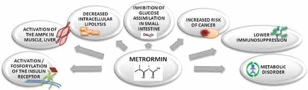 cost of metformin er without insurance