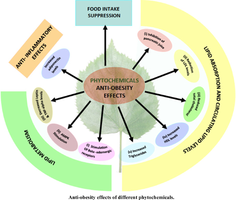 Role of Phytomolecules in the Treatment of Obesity: Targets, Mechanisms and Limitations
