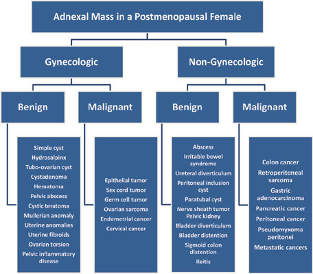 Evaluation And Management Of Adnexal Masses In Postmenopausal Women Bentham Science