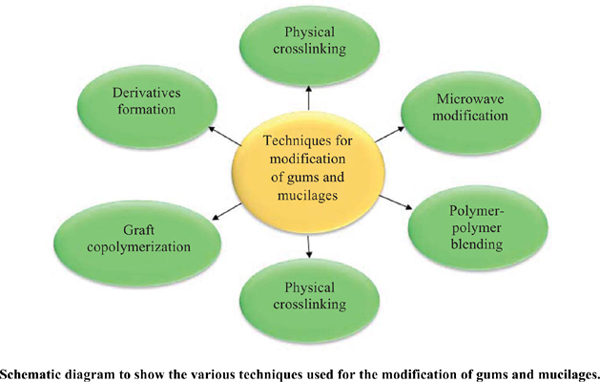 Techniques of Mucilage and Gum Modification and their Effect on Hydrophilicity and Drug Release