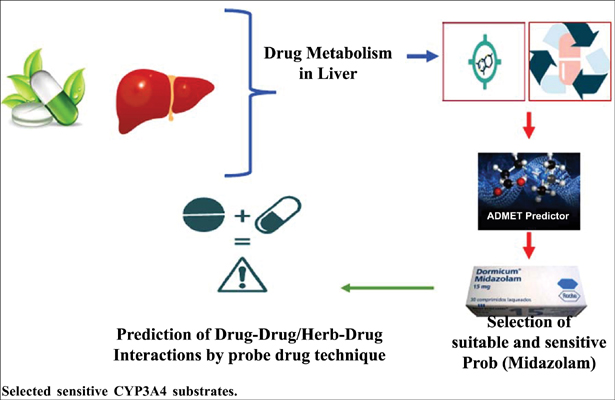 A Short Exploration of Selected Sensitive CYP3A4 Substrates (Probe Drug)