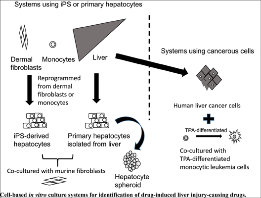 Recent Progress in Prediction Systems for Drug-induced Liver Injury Using In vitro Cell Culture
