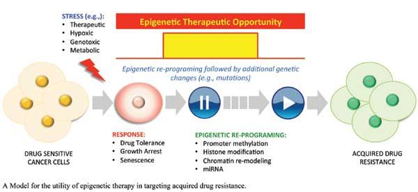The Role of Epigenetics in Drug Resistance in Cancer