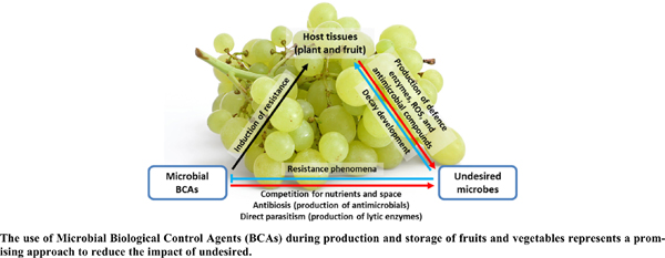 Microbial-based Biocontrol Solutions for Fruits and Vegetables: Recent Insight, Patents, and Innovative Trends