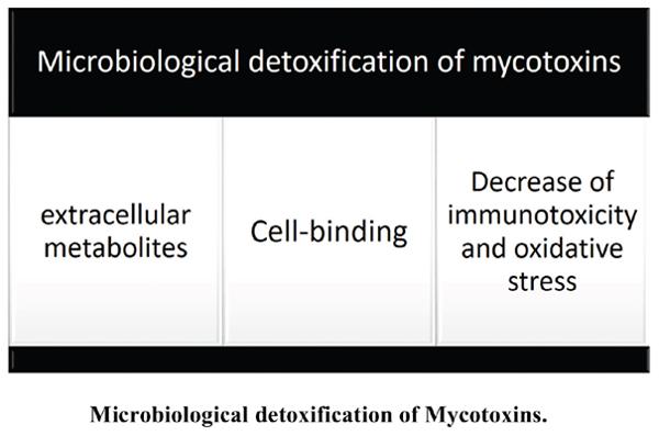 Microbiological Detoxification of Mycotoxins: Focus on Mechanisms and Advances